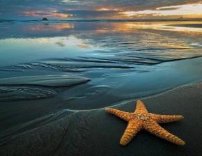 Sea Star Celebration of Life
