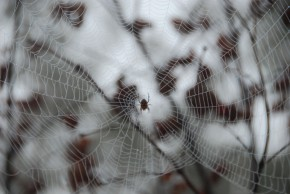 Full spider web_web